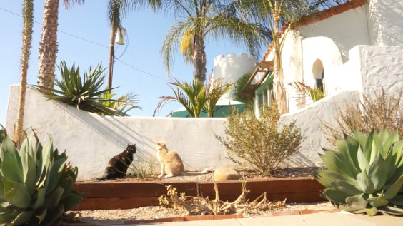 Catcha - Cat