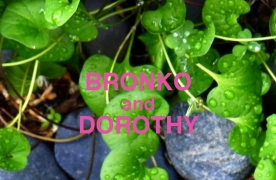 Bronko and Dorothy